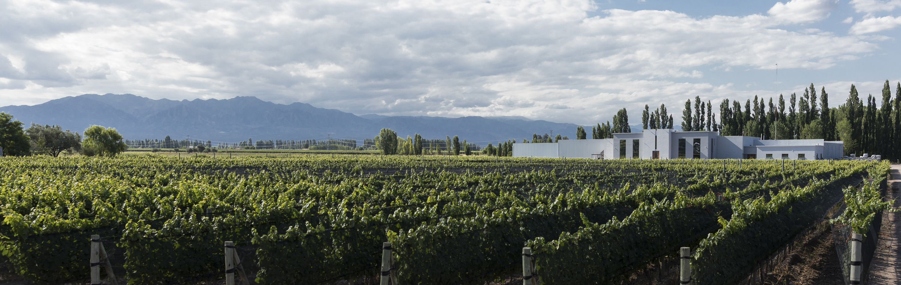 The winery is in a beautiful area (Image credit -Grupo Foster Lorca)